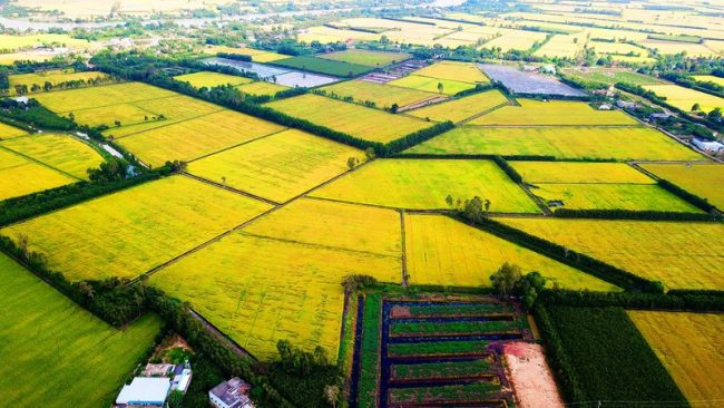 Chiến lược quy hoạch vùng đồng bằng sông Cửu Long