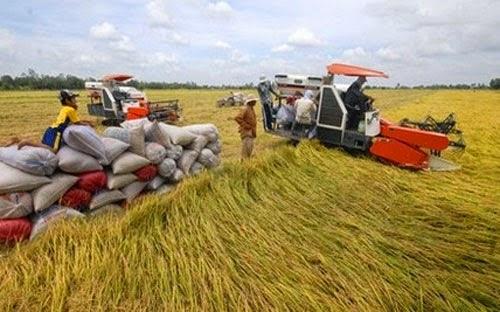 Bảo hiểm nông nghiệp, muốn làm phải chờ tổng kết?